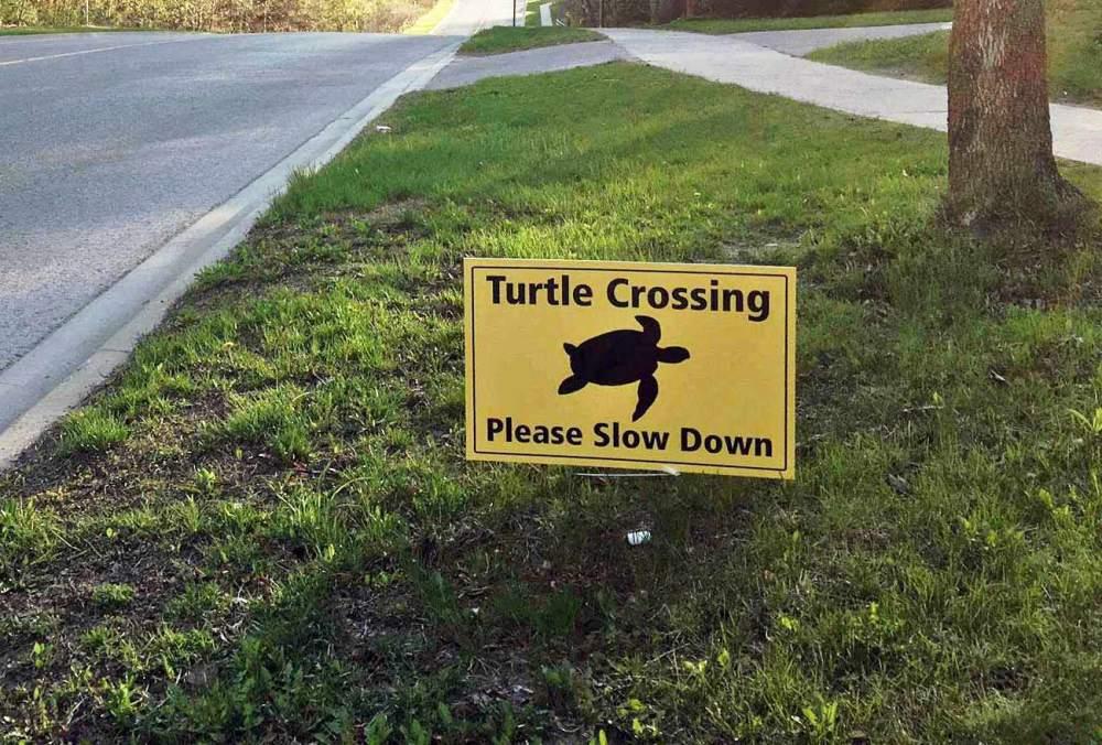 turtlesign1.jpg